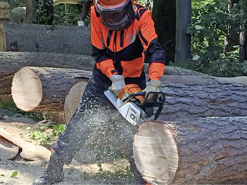 STIHL-Training in Waiblingen.